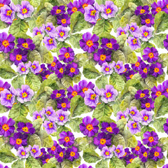 Primrose, primula, flowers. Seamless floral background. Watercolour