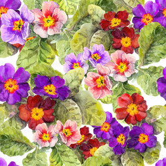 Primrose primula flowers. Seamless spring floral background. Watercolor