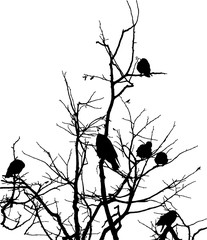 crows on branches of tree