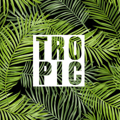 Tropical Palm. Tropical Leaves Background. Vector Background.