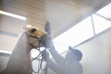 Low angle view of male stablehand grooming nervous horse