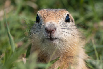 Curious Nose
