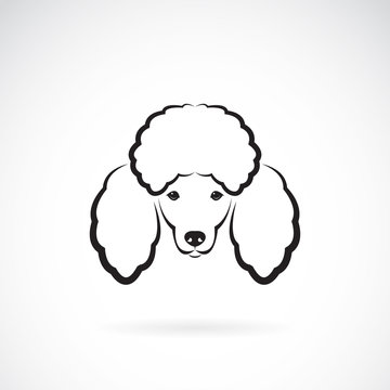 Vector image of an dog poodle face on a white background