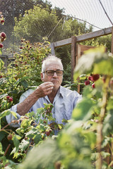Man berry-picking