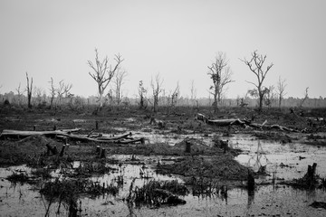 Drought and Deforestation Concept in Black and White - Ecology and Environment issue