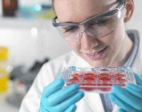 Female scientist examining stem cell cultures in laboratory