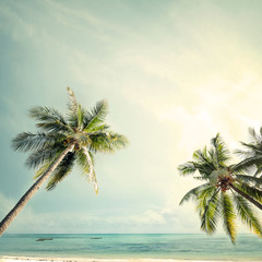 Fototapete - Palm tree on tropical coast with  in summer beach. vintage color tone stylized