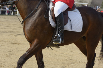 Body of a thoroughbred racehorse with veins