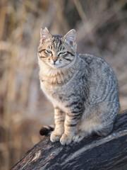 睨みつける猫