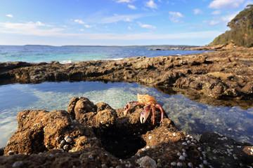 Enchanted Rockpool Jervis Bay