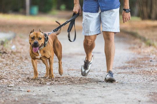 Man walking with his dog at park