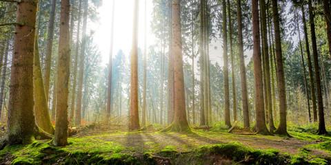 Naturpark – Wald mit Sonnenstrahlen