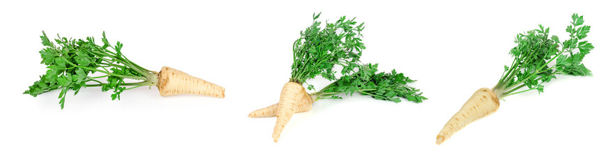 Root parsley 3