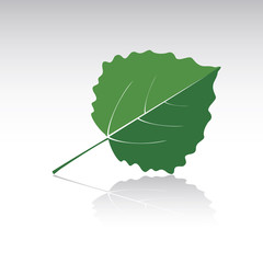 Green leaf of Aspen. Vector illustration and icon.