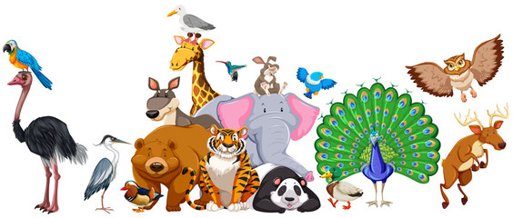 Wild animals standing in group