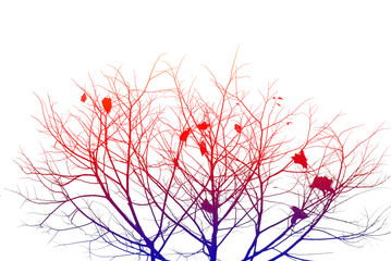 Silhouette color of branches