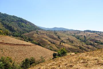 Barren terraced rice field