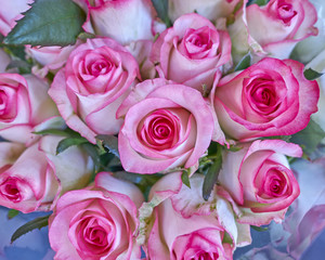 pink roses bouquet closeup, natural background