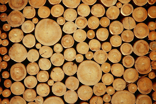 Wood log pile background