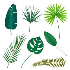 Vector Illustration of Tropical Leaves