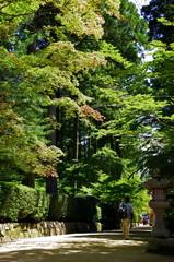 高野山金剛峰寺への参道