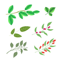 Set of  green brunches with leaves and berries, vector colorful illustration isolated on white