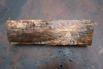 Mycelium pattern (living organisms) on wet firewood.