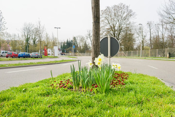 Bepflanzte Verkehrsinsel in der Stadt