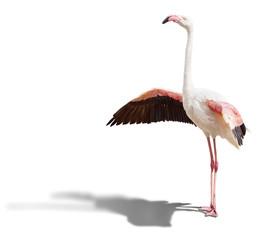 Foto op Canvas Flamingo flamingo