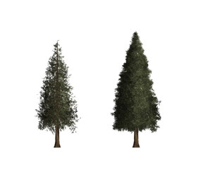 tree trees isolated white green nature background art collection