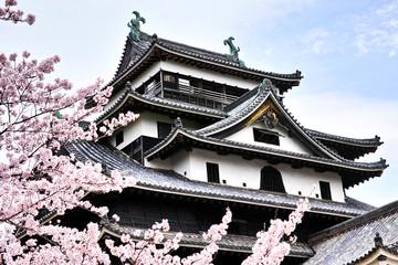 春の松江城天守閣