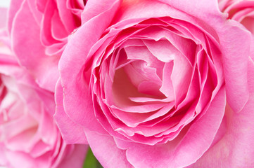 Pink rose flowers bunch