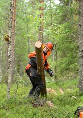 Lumberjack Worker carries, dragging log of special hooks