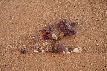 tree draw on the beach