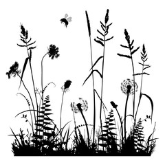 Real plant traced silhouettes isolated on white. Weed, meadow
