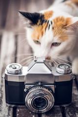 Katze schaut durch alte Kamera