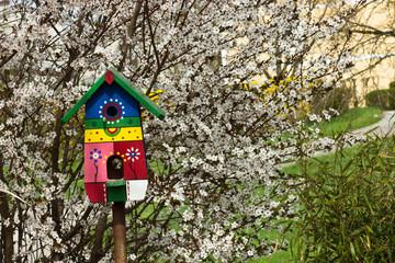 Vogelhaus und blühender Baum, Birdhouse and flowering tree