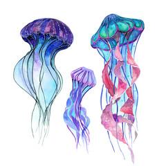Jellyfish. Watercolor illustration