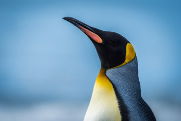 Fotobehang Pinguin Close-up of king penguin with sea behind