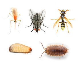 Dangerous pests vehicles of infection.  Collection of the insects on a white background.