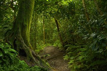 selva Tropical photos royaltyfree images graphics vectors