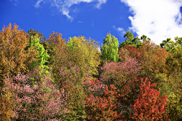 Forest chang Colour in northern Chaingmai Thailand.
