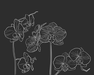 Hand drawn vector orchid on black