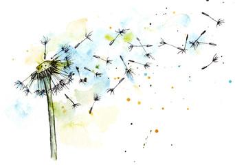 Fototapeta Dandelion watercolor botanical illustration obraz