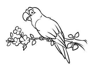 Parrot coloring pages cartoon illustration animal character