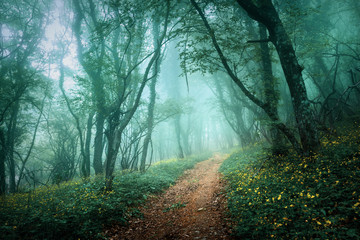 Foto op Canvas Bos Road through a mysterious dark forest in fog with green leaves a