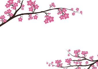 Cherry blossom, Sakura  pink flowers  background.