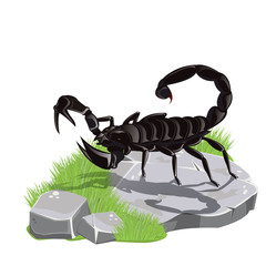 illustration.scorpion