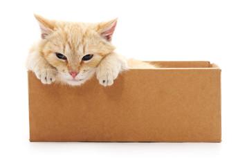 Red kitten in a box.