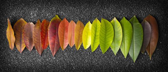 Fototapeta chromatic scale made of leaves obraz